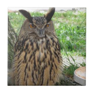 Retrato del búho largo-espigado. Otus del Asio, Azulejo Cuadrado Pequeño