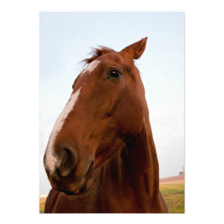 Retrato del caballo anuncio personalizado