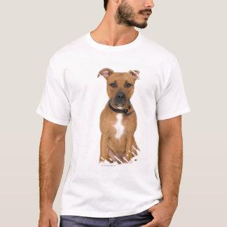 Retrato del estudio del perrito americano 3 del camiseta