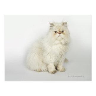 Retrato del gato persa postales