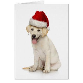 Retrato del labrador retriever blanco tarjeta de felicitación