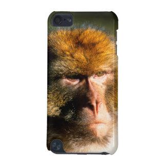 Retrato del Macaque de Barbary (Macaca Sylvanus)