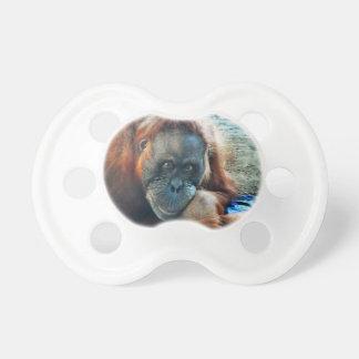 Retrato del orangután chupete de bebé