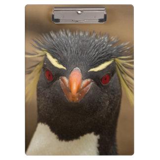 Retrato del pingüino de Rockhopper Carpeta De Pinza