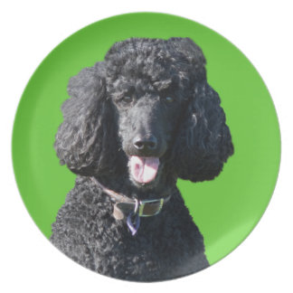 Retrato hermoso de la foto del negro del perro de  plato para fiesta