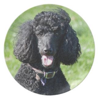Retrato hermoso de la foto del negro del perro de  platos para fiestas