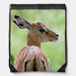 Retrato joven del potro del impala (Aepyceros Mochila
