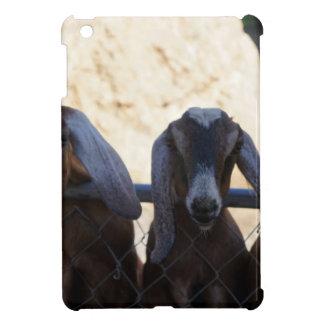 Reunión de la cabra