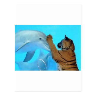 Reunión del delfín y del tigre postal