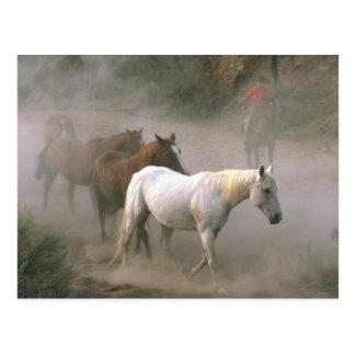 Reunión del vaquero postal