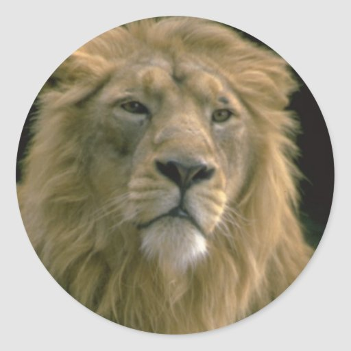 Rey de la imagen del león de la selva en artículos etiquetas redondas