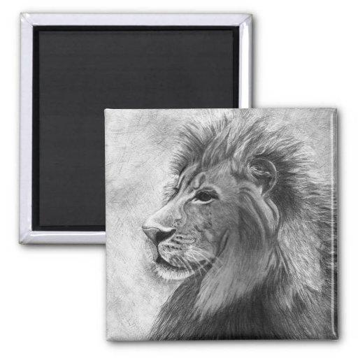 Rey de la selva, león dibujado mano en grafito iman de frigorífico