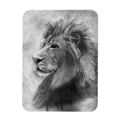 Rey de la selva, león dibujado mano en grafito imán de vinilo
