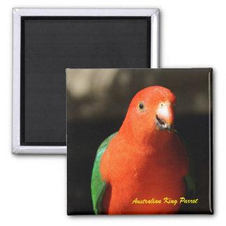 Rey de sexo masculino australiano Parrot Imán