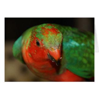 Rey de sexo masculino juvenil australiano Parrot Tarjeta De Felicitación
