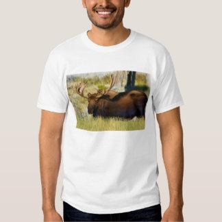 Rey Moose Bull de Teton Camisas
