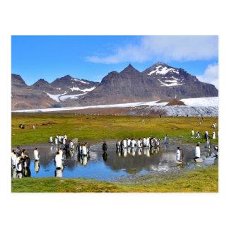 Rey pingüinos postal