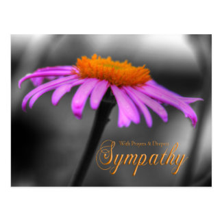Rezos y condolencia Coneflower anaranjado púrpura Postal