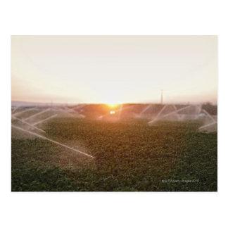 Riego agrícola del sistema de irrigación postal