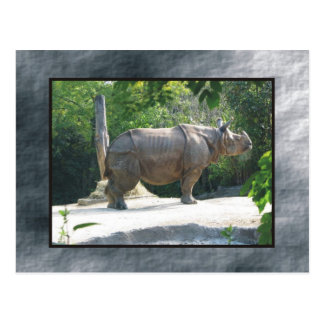 rino del parque zoológico tarjetas postales