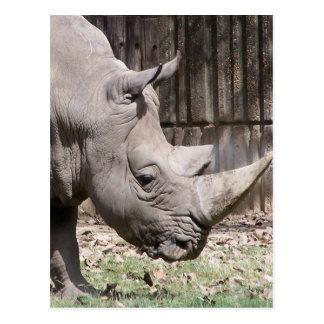rinoceronte blanco postal