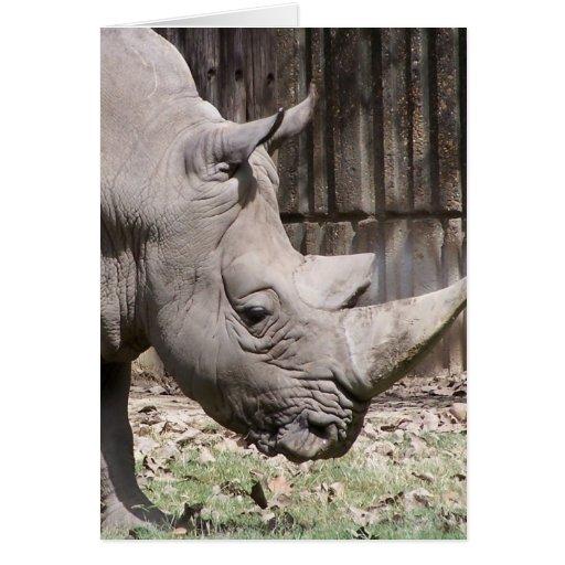 rinoceronte blanco tarjeton