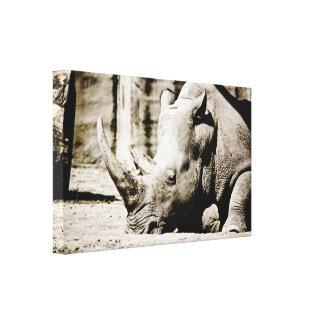 Rinoceronte Impresiones De Lienzo