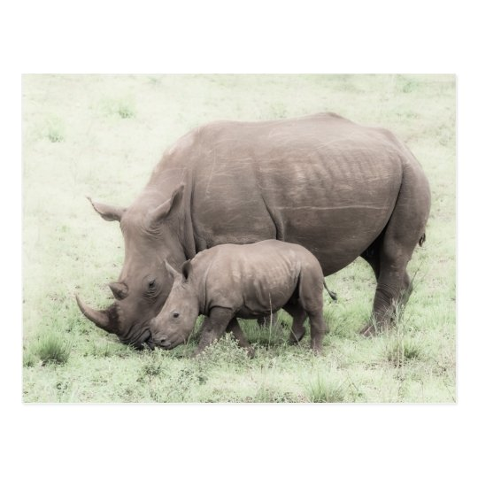 Rinoceronte y postal blancos del bebé