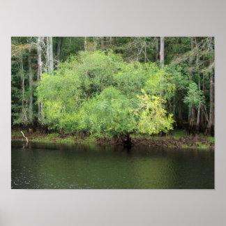 Río Carolina del Norte de la madera de construcció Posters