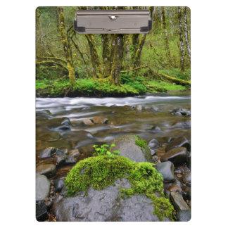 Río en el bosque verde, Oregon