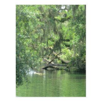 Río la Florida de Blue Springs Postal