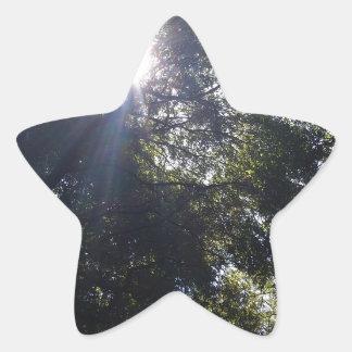 Roble Gnarly Pegatina En Forma De Estrella