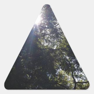 Roble Gnarly Pegatina Triangular