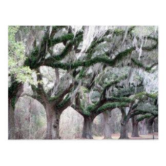 Robles de Charleston Tarjetas Postales