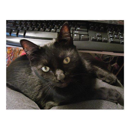 Roca de los gatos negros postal