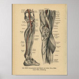 Rodilla de la pierna de la impresión de la