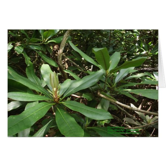 Rododendro Tarjeta Pequeña