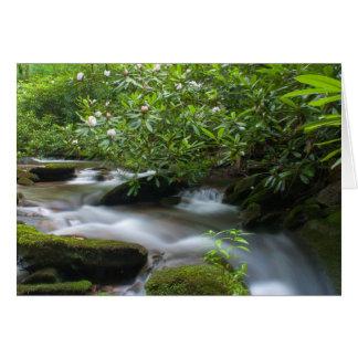 Rododendros en la tarjeta de The Creek