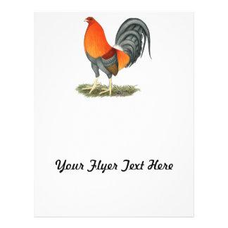 Rojo azul del gallo de pelea flyer