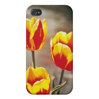 Rojo escoja los tulipanes tempranos, flores de Kei iPhone 4 Fundas