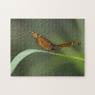 Rompecabezas de la mariposa del virrey