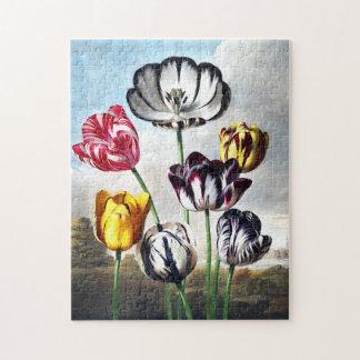 Rompecabezas de los tulipanes