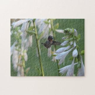 Rompecabezas del colibrí