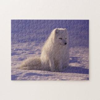 Rompecabezas mullido del Fox de la nieve