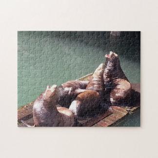 Rompecabezas ruidoso de los leones marinos