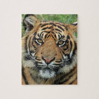 rompecabezas tigre