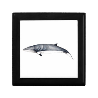 Rorcual aliblanco joyero - Jewel box whale