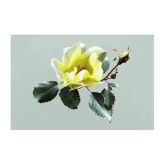 Rosa amarillo delicado impresión acrílica