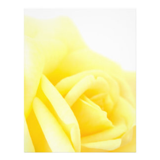 Rosa amarillo folleto 21,6 x 28 cm