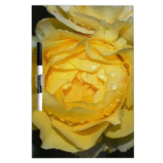 Rosa amarillo mojado pizarra blanca